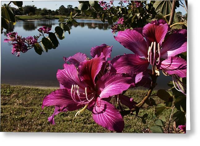 Purple Orchid Tree  Greeting Card by Regina  Williams