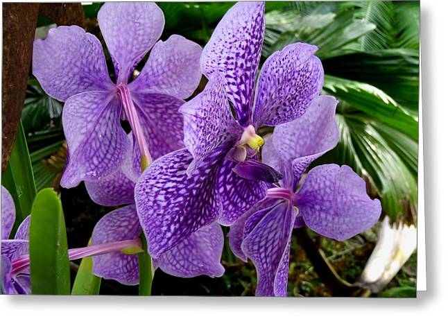 Purple Orchids Greeting Card by Carey Chen