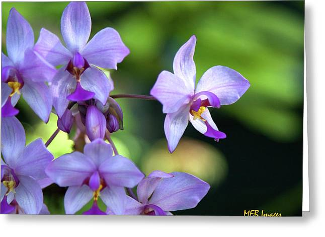Purple Orchids Greeting Card by Margaret Buchanan