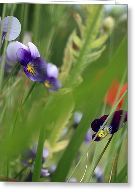Purple Pansies Greeting Card by Rebeka Dove