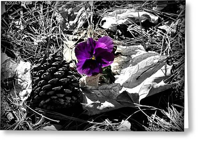 Greeting Card featuring the photograph Purple Pansy by Tara Potts