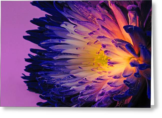 Purple Passion Greeting Card by Don Spenner