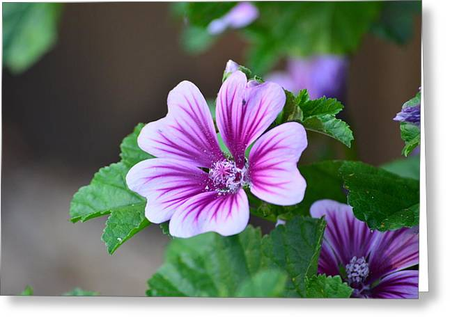 Purple Passion Greeting Card by Jennifer  King