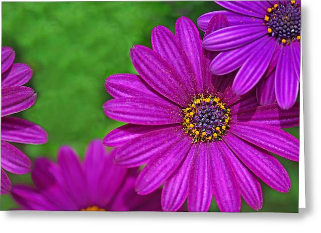 Purple Passion Greeting Card by Joan Herwig