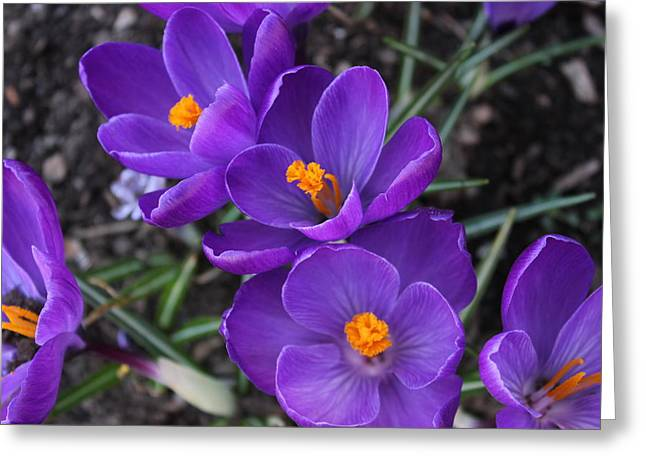 Greeting Card featuring the photograph Purple Passion by Judy Palkimas