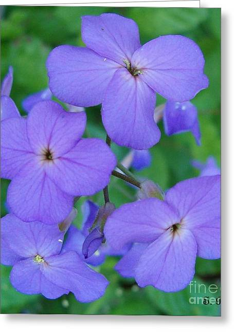 Greeting Card featuring the photograph Purple Passion by Sara  Raber