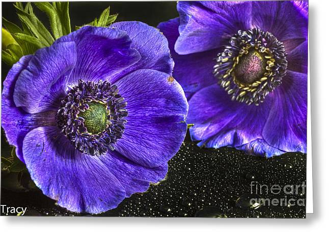 Purple Passion Greeting Card by Tracy  Hall