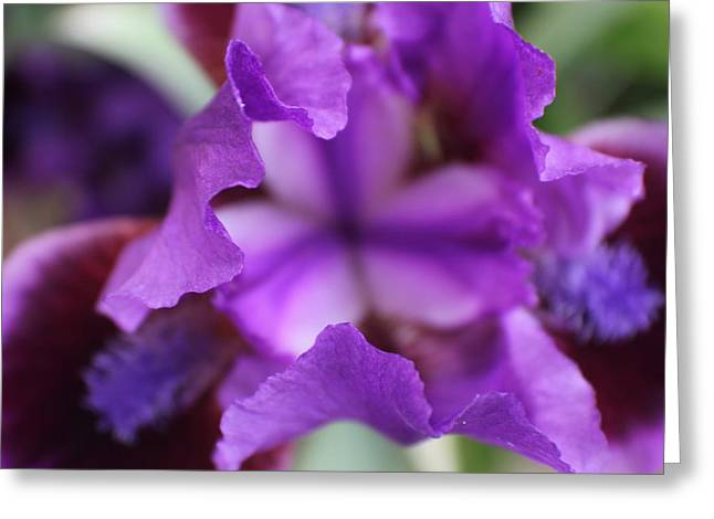 Purple Passion Greeting Card by Trent Mallett