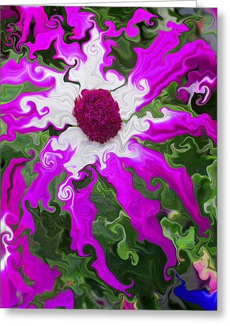 Floating Pericallis Greeting Card by Kathy Moll