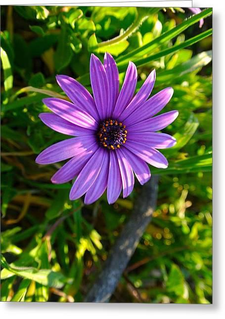 Purple Pleasure Greeting Card
