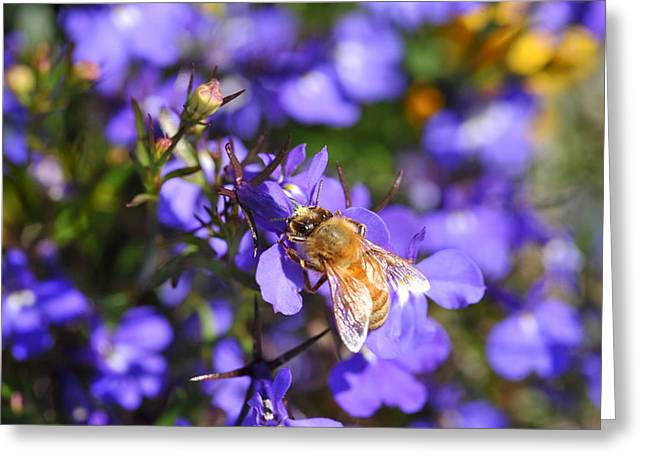 Purple Pollination  Greeting Card