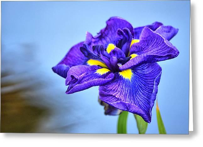 Purple Pond Iris Greeting Card