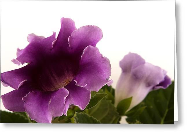Purple Power Greeting Card by Robert Culver