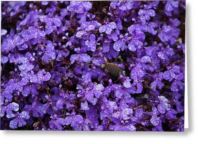 Purple Rain Greeting Card