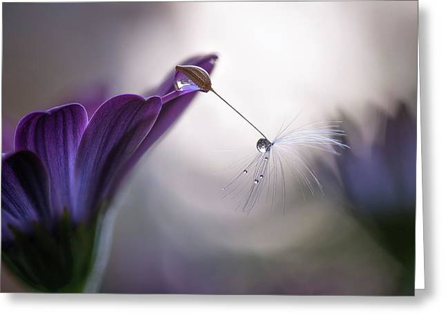 Purple Rain Greeting Card by Silvia Spedicato