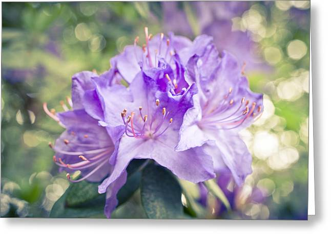 Purple Rhododendron Sparkles Greeting Card