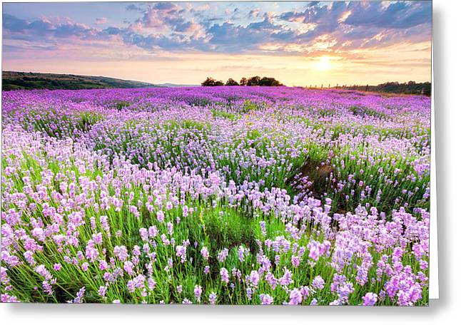Purple Sea Greeting Card by Evgeni Dinev