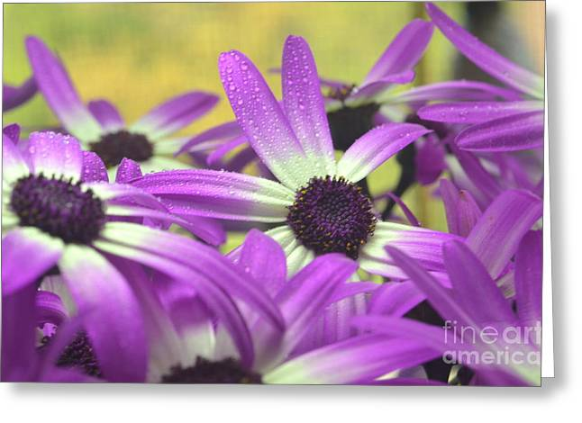 Purple Senetti IIi Greeting Card by Cate Schafer