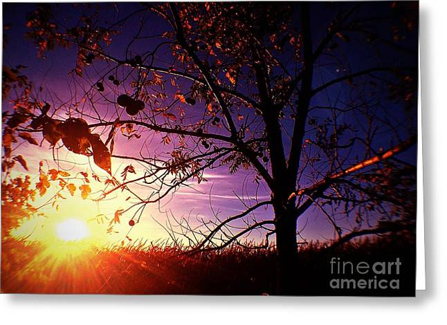 Purple Skies And Walnut Trees Greeting Card by Garren Zanker