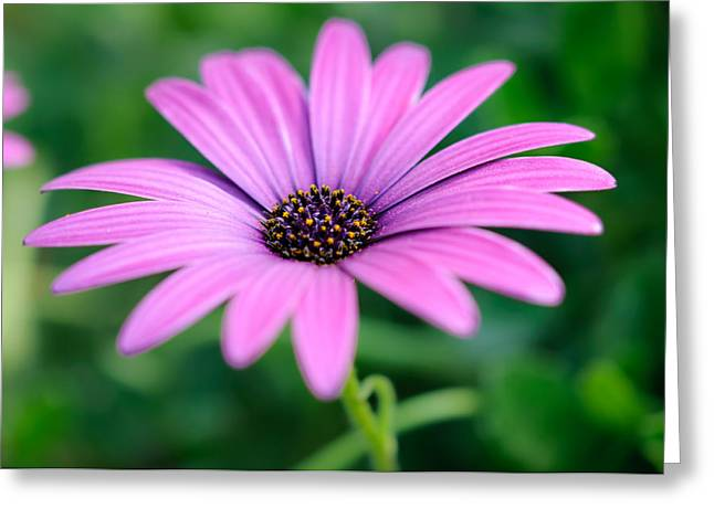 Purple Smile Greeting Card by Ivelin Donchev
