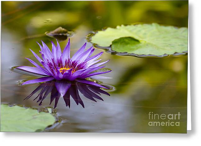 Purple Spiked Water Lily Greeting Card by Sabrina L Ryan