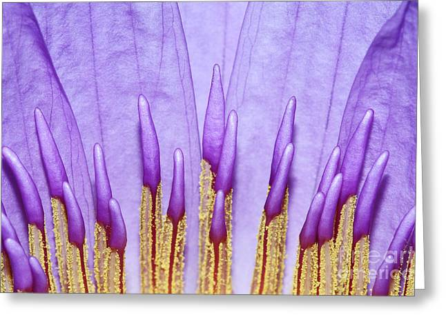 Purple Spires Greeting Card by Judy Whitton