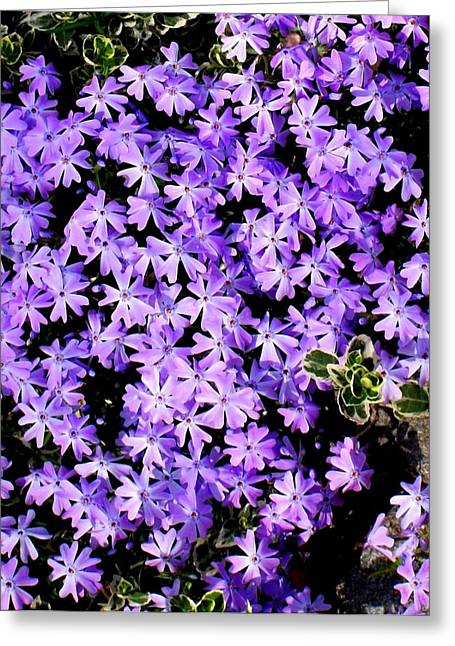 'purple Springtime' Greeting Card