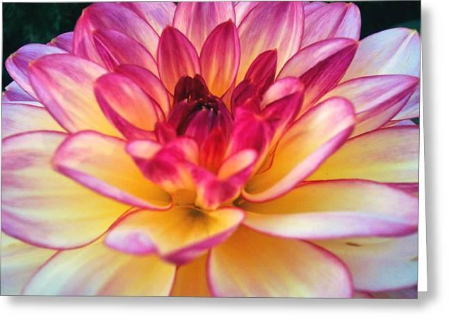Purple Star Flower Greeting Card by Beril Sirmacek