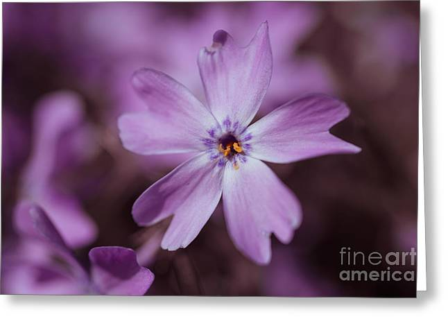 Purple Star Greeting Card by Hannes Cmarits