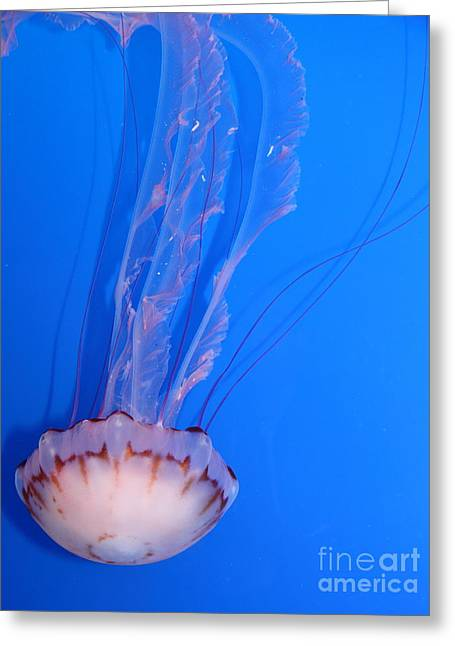 Purple Striped Jelly Fish 5d24934 Greeting Card