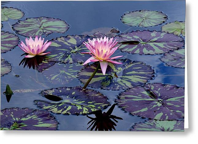 Waterlily With Purple Striped Lily Pads Greeting Card