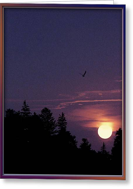Greeting Card featuring the photograph Purple Sunset With Sea Gull by Peter v Quenter