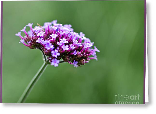 Greeting Card featuring the photograph Purple Top Flower by Maria Janicki
