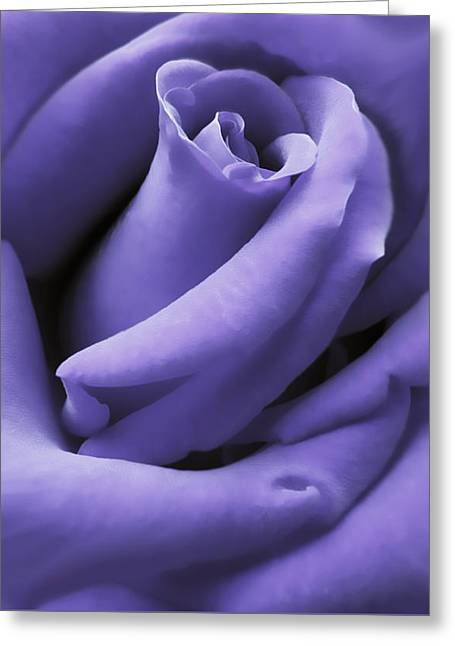 Purple Velvet Rose Flower Greeting Card