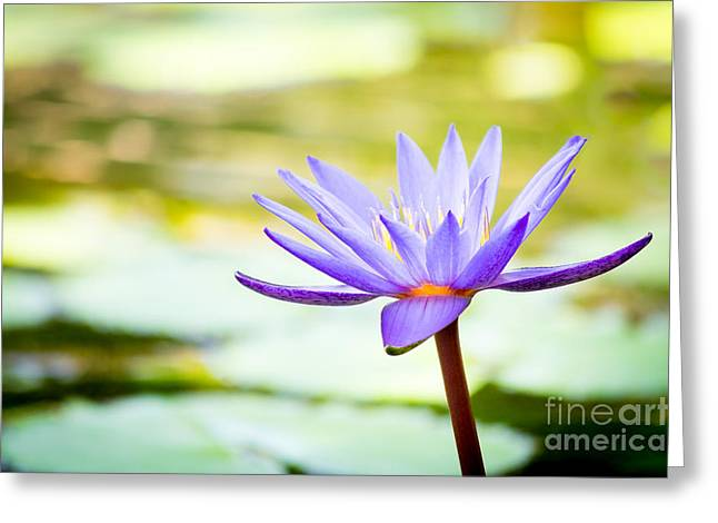 Purple Victoria Regia Greeting Card by VistoOnce Photography
