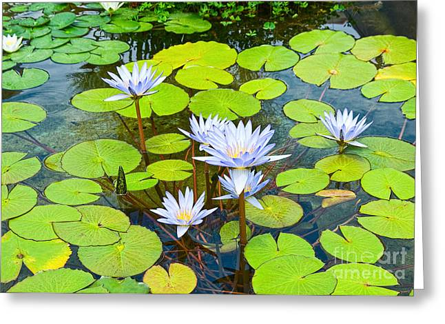 Purple Water Lilies In A Pond. Greeting Card by Jamie Pham