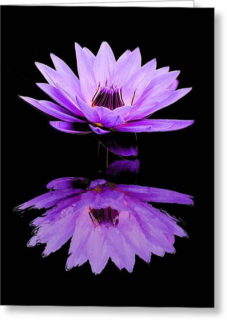 Purple Water Lily Greeting Card by Elizabeth Budd
