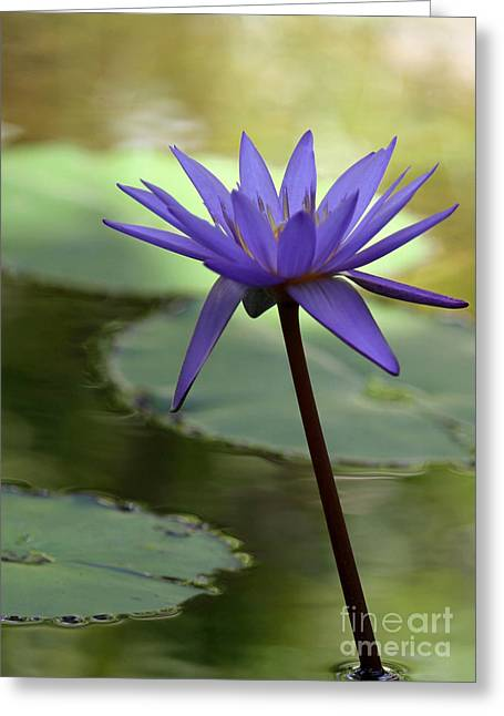 Purple Water Lily In The Shade Greeting Card by Sabrina L Ryan