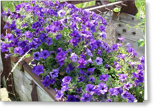 Purple Wave Petunias In Rusty Horse Drawn Spreader Greeting Card