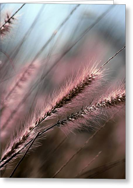 Purple Waves Of Grain Fine Art Print Greeting Card
