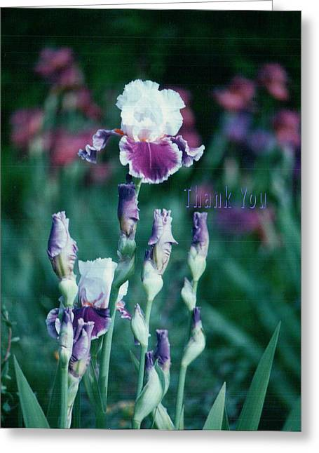 Purple White Iris And A Reminder To Utter The Words Thank You. Greeting Card