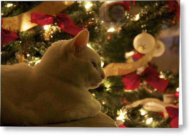 Purrfect Holidays Greeting Card