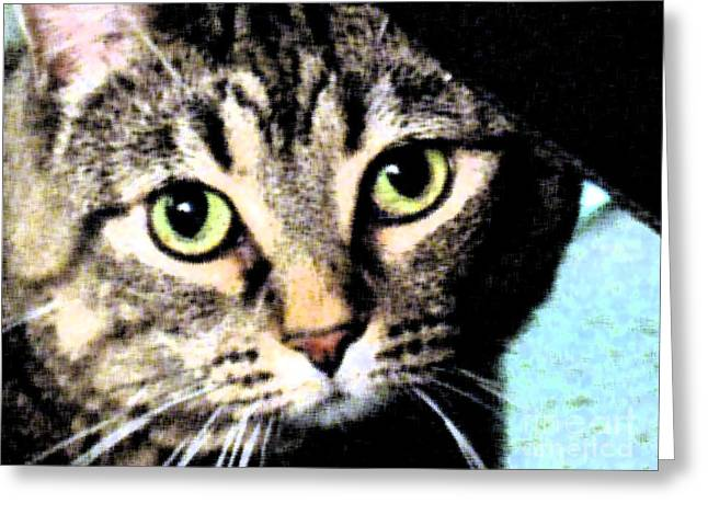 Greeting Card featuring the photograph Purrfectly Bright Eyed by Nina Silver