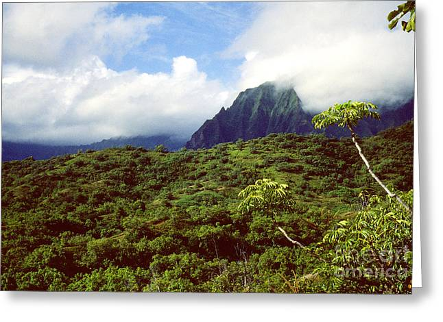 Puu Piei Trail Koolau Mountains Greeting Card by Thomas R Fletcher