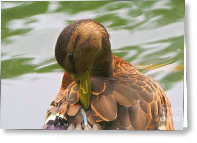 Mallard Duck In Central Park Greeting Card