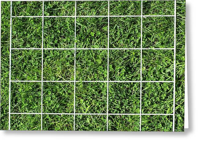 Quadrat On A Lawn Greeting Card by Science Photo Library