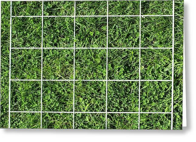 Quadrat On A Lawn Greeting Card