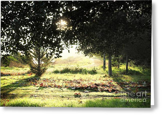 Greeting Card featuring the photograph Quarry Lakes Sunrise by Ellen Cotton