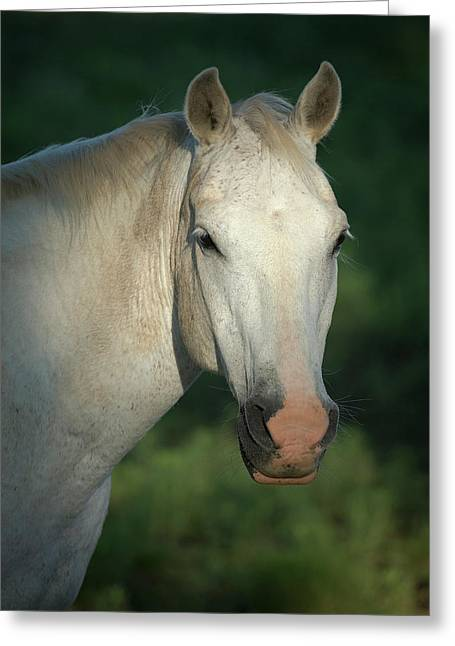 Quarter Horse, Philmont Scout Ranch Greeting Card