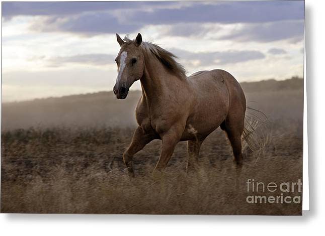 Quarter Or Paint Horse Greeting Card by M. Watson